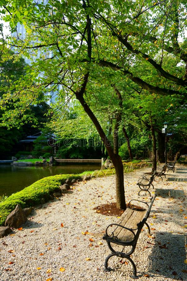 Benches by the pond in Japanese garden, Tokyo royalty free stock photos