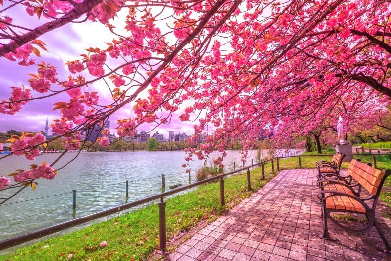 Hanami in Ueno Park stock photography