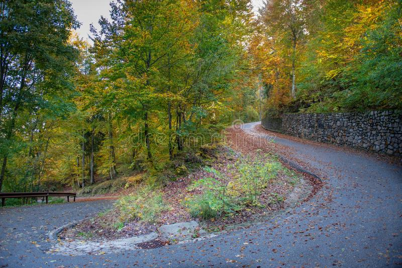 Bend in mountain road in the forest stock photography