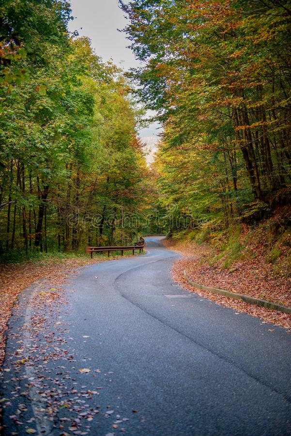 Bend in mountain road in the forest royalty free stock photo