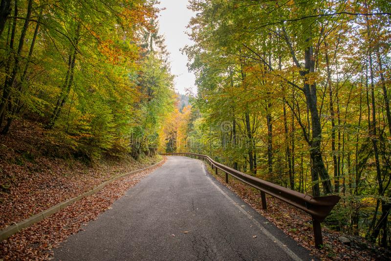 Bend in mountain road in the forest stock photos