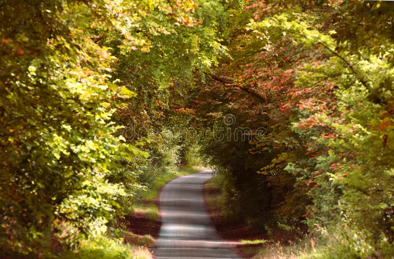 A bend in the path. Blind corner. Mystery. Unknown. Lost. Future. A bend in a leafy forest path that is a blind corner due to the trees obscuring the way ahead stock image