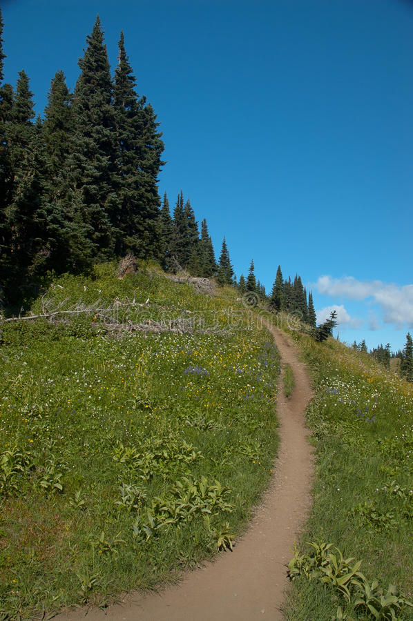 Bend in the Trail royalty free stock photo