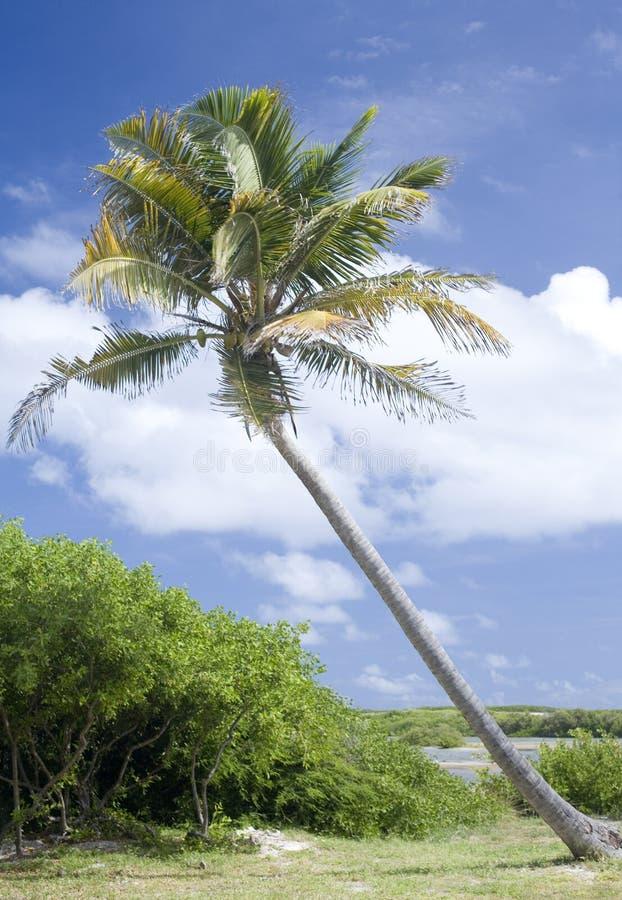 Bending palm stock photos