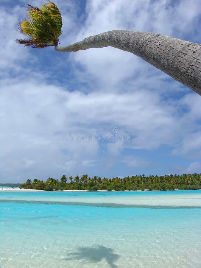 Bending Palm royalty free stock image