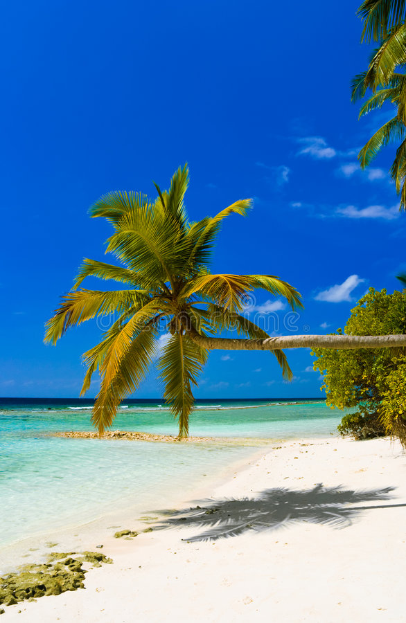 Download Bending Palm Tree On Tropical Beach Stock Image - Image: 8997229