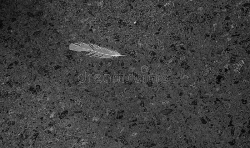 Bending white bird feather stock photo