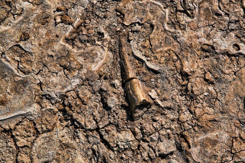 bendinosaur arkivbilder