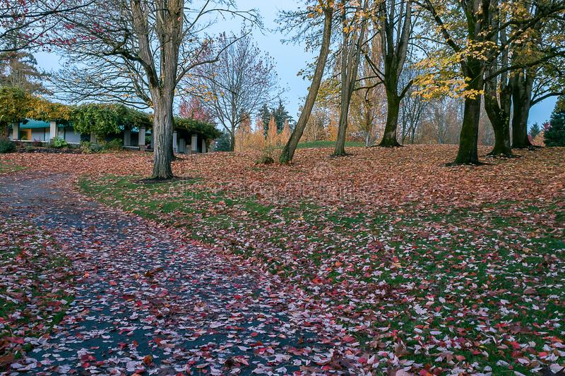Bendy path in fall royalty free stock image