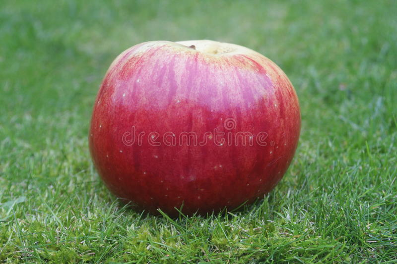 Bene inaspettato Apple di Autum fotografia stock libera da diritti