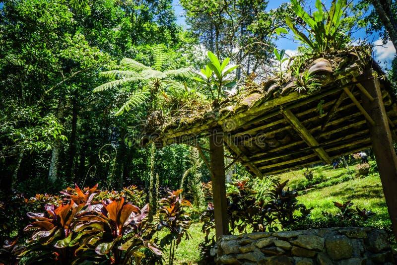 Bene in mezzo alla natura con principalmente verde fotografia stock libera da diritti