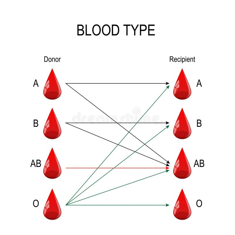 Beneficiario y donante Tipos de sangre ilustración del vector