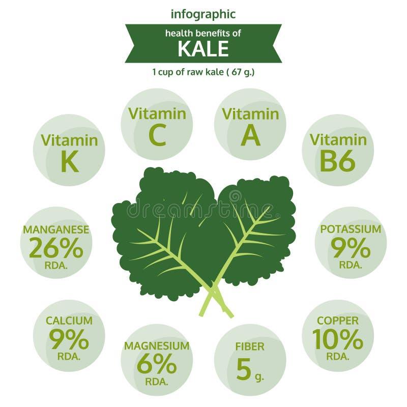 Benefit health of kale, info graphic food, vegetable vector. Illustration stock illustration