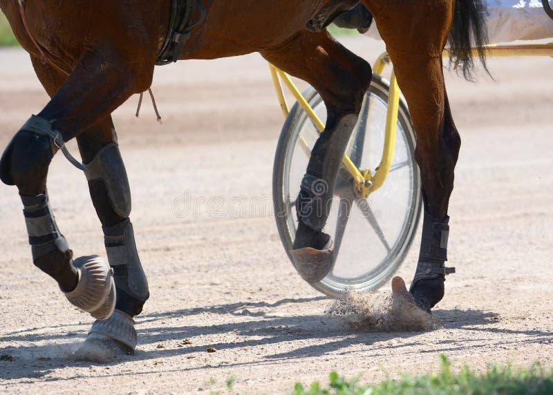 Benen van een draverpaard en een paarduitrusting Uitrustingspaardenrennen in detail royalty-vrije stock foto's