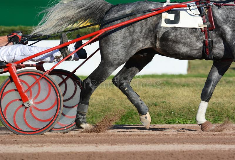 Benen van een grijze draverpaard en een paarduitrusting Uitrustingspaardenrennen in detail royalty-vrije stock afbeelding