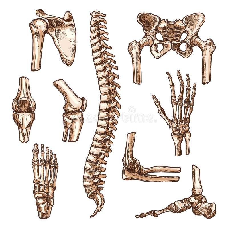 Benet och skarven av det mänskliga skelettet skissar uppsättningen vektor illustrationer