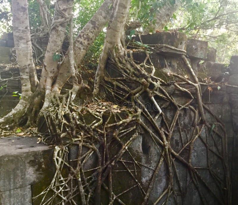 Beng Mealea Angkor Temple, Camboya imágenes de archivo libres de regalías