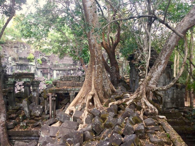 Beng Mealea Angkor Temple, Kambodja royalty-vrije stock foto's