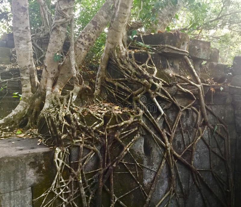 Beng Mealea Angkor Temple, Cambodia. Beng Mealea or Bung Mealea is a temple in the Angkor Wat period located 40 km east of the main group of temples at Angkor royalty free stock images