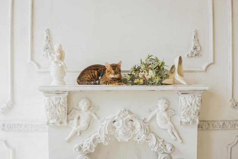 Bengal cat and beautiful wedding bouquet stock image