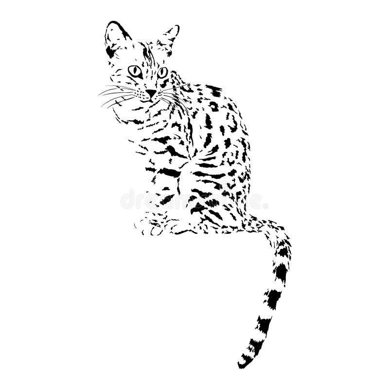 Bengal Cat Stock Illustrations 4 744 Bengal Cat Stock Illustrations Vectors Clipart Dreamstime