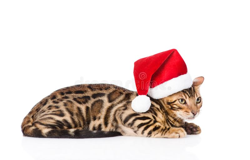 Bengal kitten in red santa hat. isolated on white background stock photo