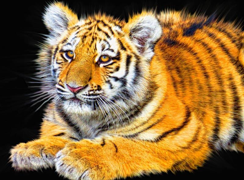 Bengal Tiger Free Public Domain Cc0 Image