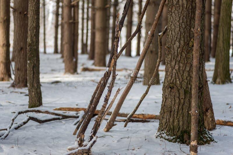Bengalas que inclinam outra vez a árvore na floresta do pinho no inverno imagens de stock