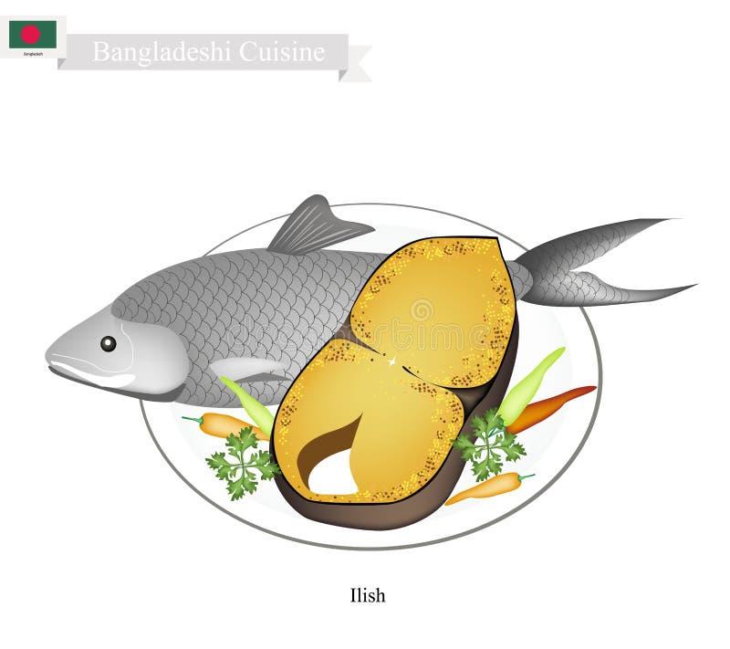 Bengalczyk Soląca i Smażąca Ilish ryba na Białym tle royalty ilustracja