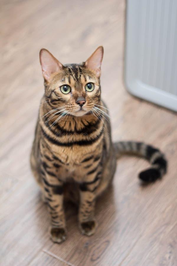 Bengalia kota patrzeć fotografia royalty free