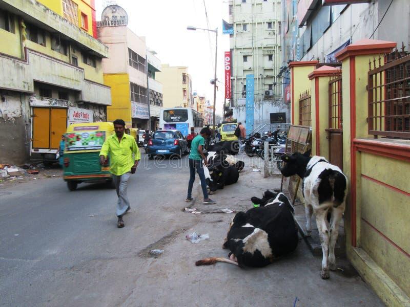 Bengaluru in Karnataka. In the southwest of India royalty free stock photo