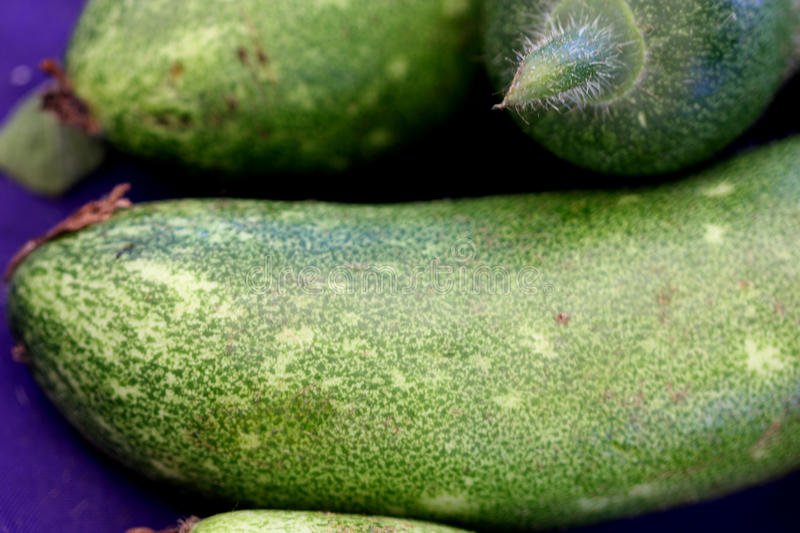 Benincasa hispida var. chieh-qua, Fuzzy gourd, moa qua. Hairy fruits on a vine, mostly stir fried, popular in Chinese cousine stock photo
