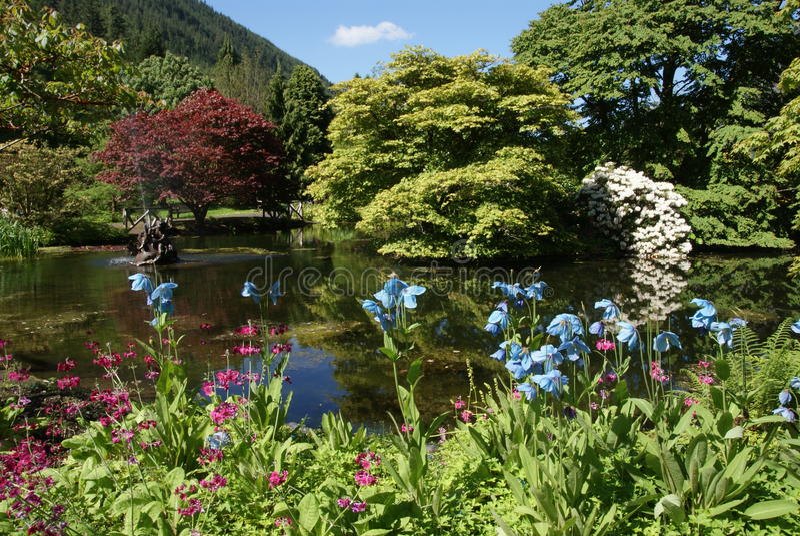 Benmore Botanic Gardens. Beautiful view of the Benmore Botanic Gardens in Scotland stock photography