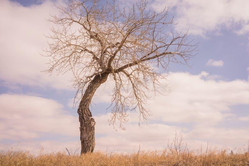 Bent Tree in der Wiese lizenzfreie stockfotografie