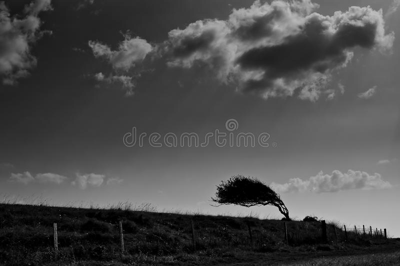 The bent tree. Small bent tree on the hill. The shy is cloundy but sunny stock photos