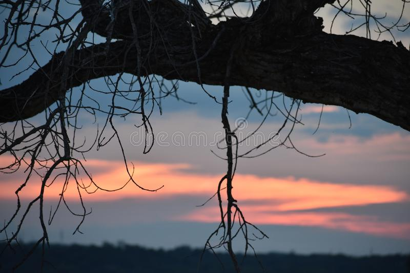 Bent Tree at sunset in Weatherford lake in Texas. This was taken in Texas, while driving around looking for nice images to capture stock photography