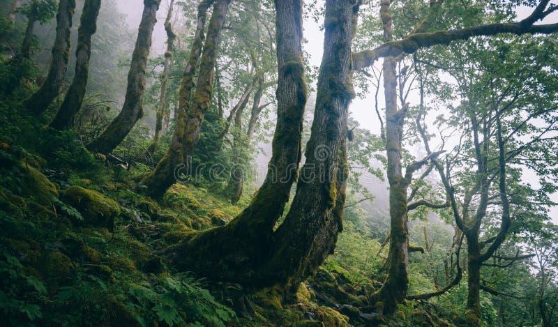 Bent Trees op de Berghelling stock fotografie