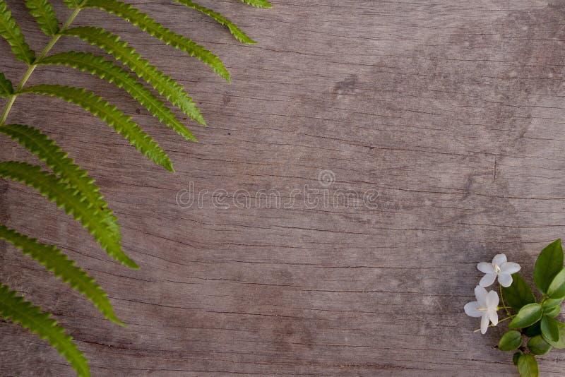 Benth di religiosa di Wrightia e felce verde della foglia su di legno marrone immagine stock libera da diritti