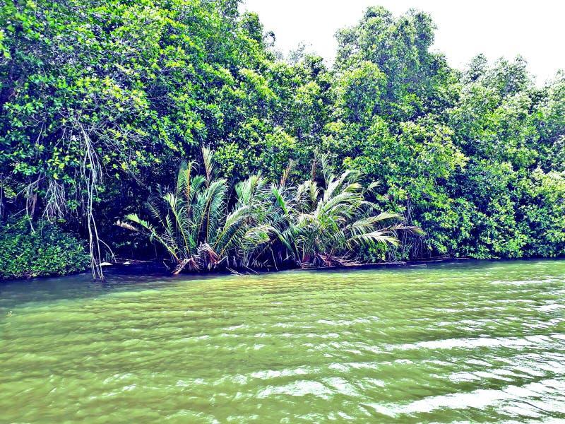 Bentota lake stock images