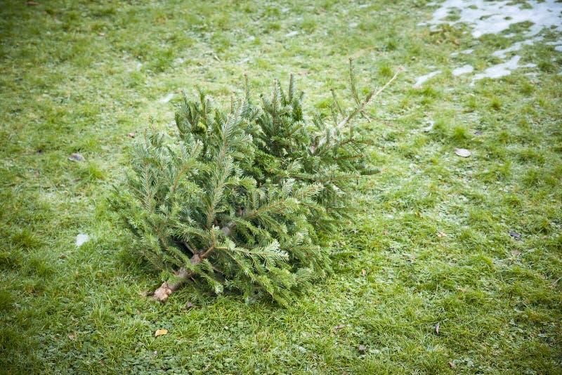 Benutzter Weihnachtsbaum lizenzfreies stockfoto