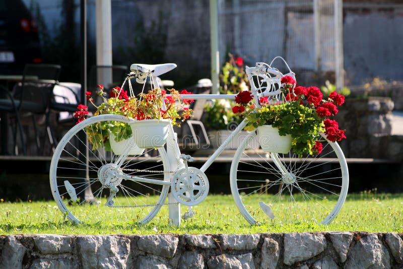 Benutztes Fahrrad malte weiß mit den mehrfachen Blumentöpfen, die von den kleinen roten Blumen voll sind, die an den Seiten hänge lizenzfreie stockfotos