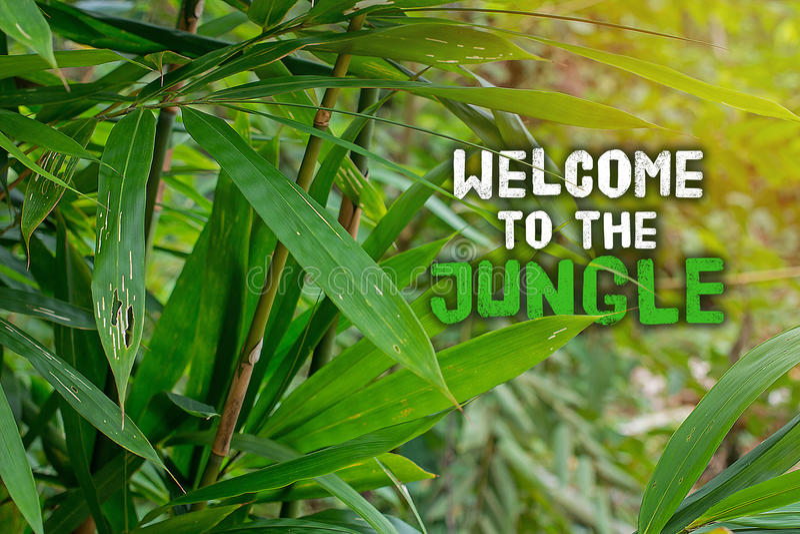 Benvenuto alla giungla Questo paesaggio tropicale ed esotico si apposta con i pericoli nascosti ma è un grande posto per trekking fotografia stock libera da diritti