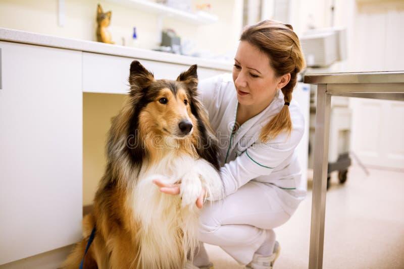 Benvenuto per inseguire paziente prima dell'esame alla clinica dell'animale domestico immagini stock