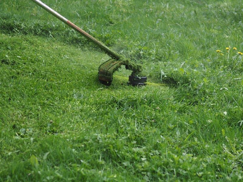 Benzina del regolatore della falciatrice da giardino con la linea di pesca fotografia stock