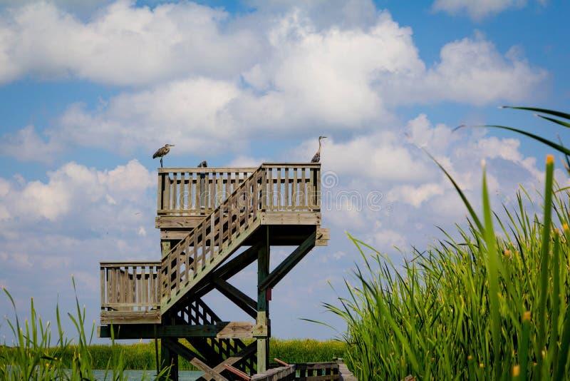 Beobachtung Birding-Turm lizenzfreies stockbild