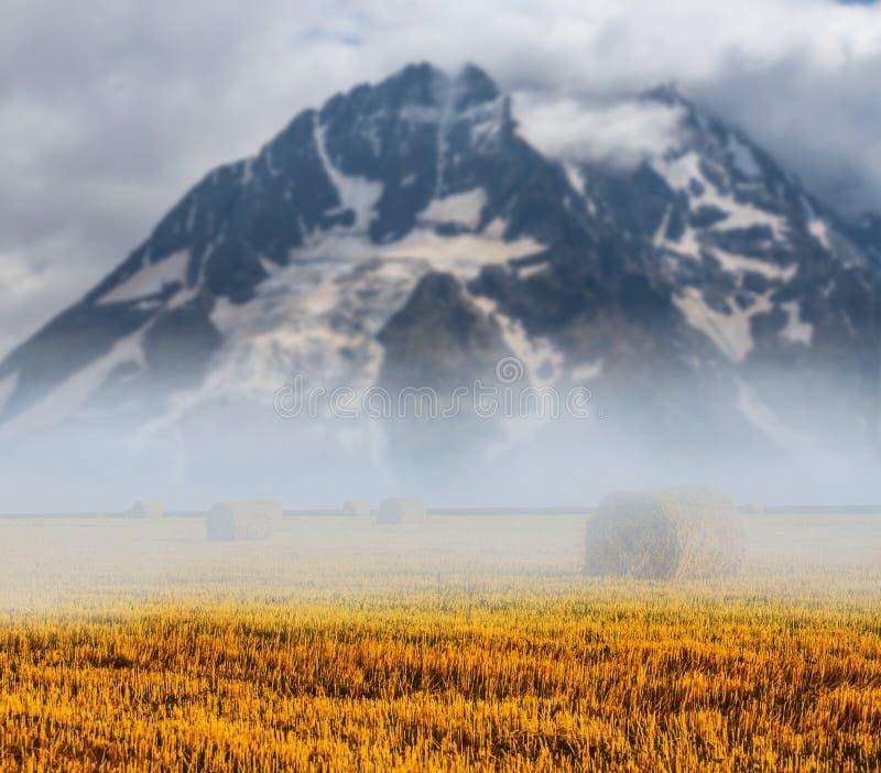 Beound sitiado por la nieve del soporte un campo de trigo del verano imagenes de archivo