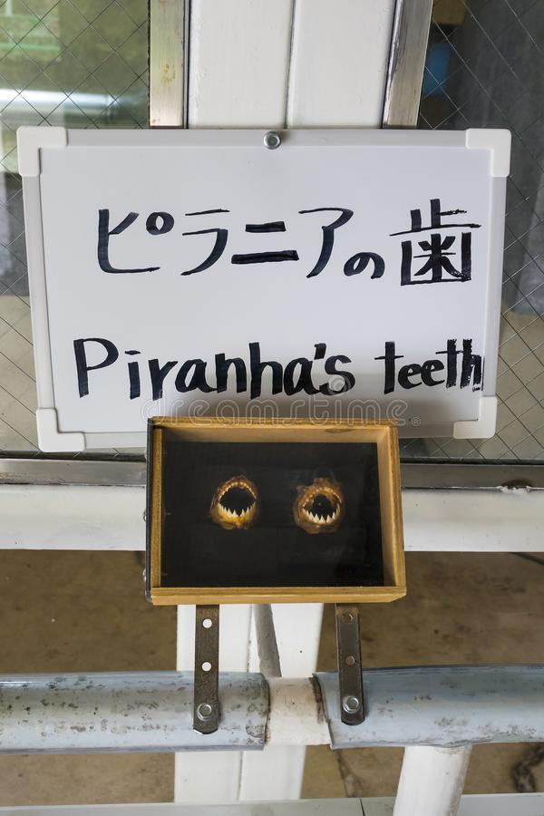 Piranha`s teeth shown as a point of interest near the Kamado Jigoku pool. Beppu, Japan - November 2, 2018: Piranha`s teeth shown as a point of interest near the stock image