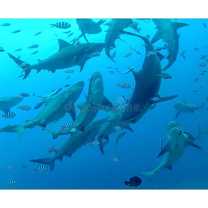 Beqa-Lagune, Fidschi lizenzfreie stockfotos
