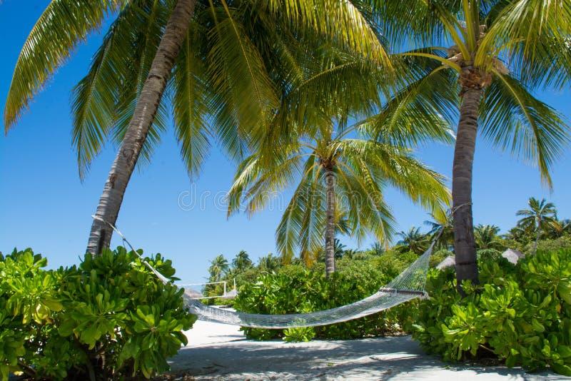 Bequeme gemütliche Hängematte zwischen Palmen in der Tropeninsel lizenzfreie stockfotografie