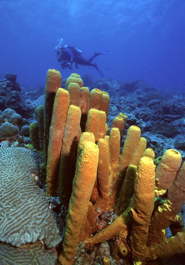 Free Bequia Sponges Royalty Free Stock Photo - 73595